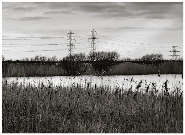 Reeds by Nikonuser1