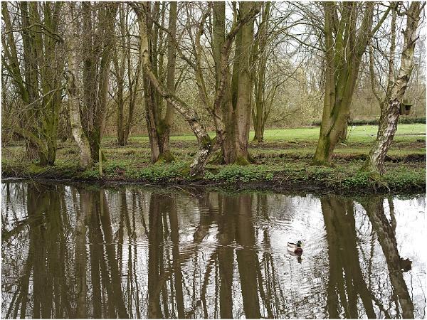 Wetlands by johnriley1uk