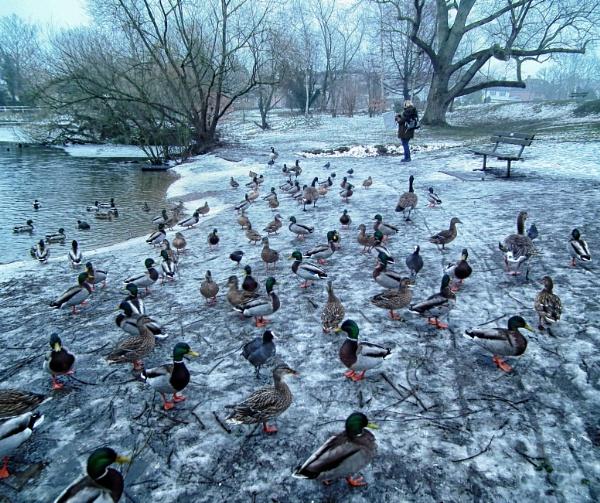 The birds! by KrazyKA