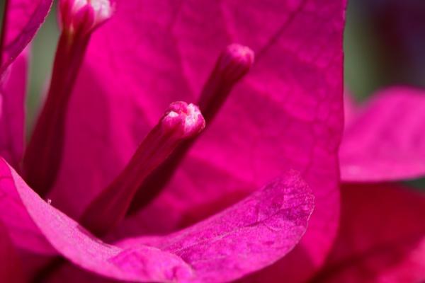 Pink by Savvas511