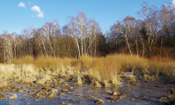POLAND - Nature\'s Impressions No.85 by PentaxBro