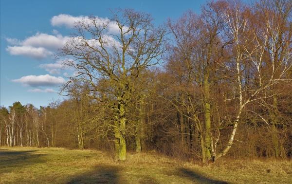 POLAND - Nature\'s Impressions No.82 by PentaxBro