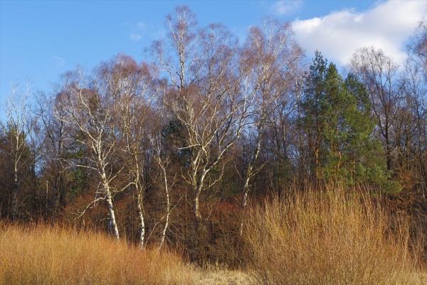 POLAND - Nature\'s Impressions No.80 by PentaxBro