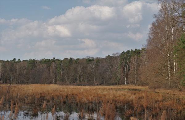 POLAND - Nature\'s Impressions No.88 by PentaxBro