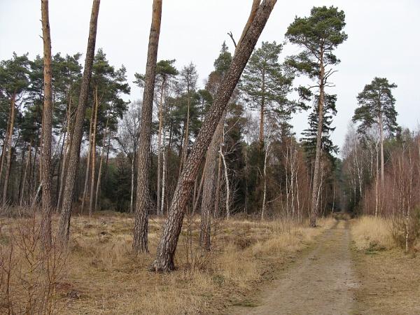 POLAND - Nature\'s Impressions No.78 by PentaxBro