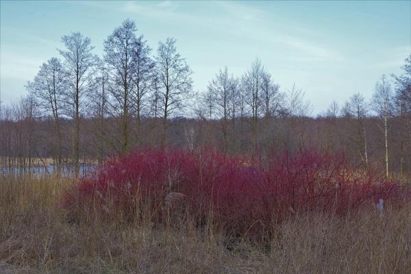 POLAND - Nature\'s Impressions No.70 by PentaxBro