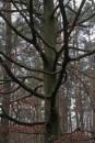 POLAND - Nature's Impressions No.67 by PentaxBro