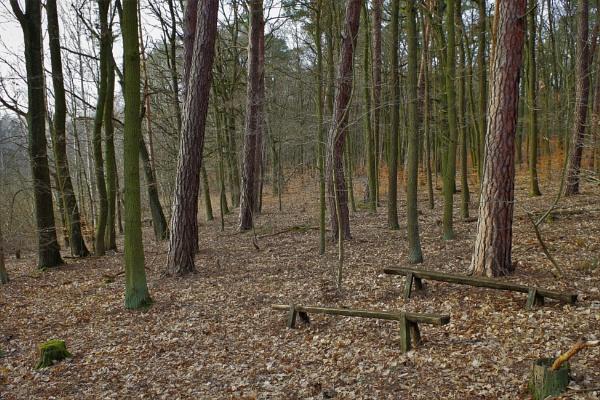 POLAND - Nature\'s Impressions No.81 by PentaxBro