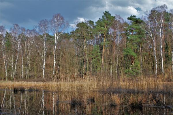 POLAND - Nature\'s Impressions No.26 by PentaxBro