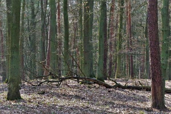 POLAND - Nature\'s Impressions No.72 by PentaxBro