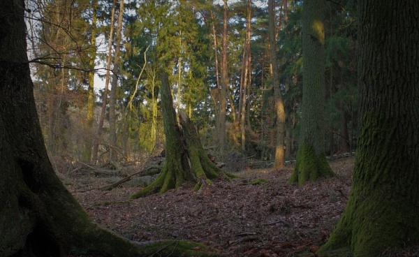 POLAND - Nature\'s Impressions No.40 by PentaxBro