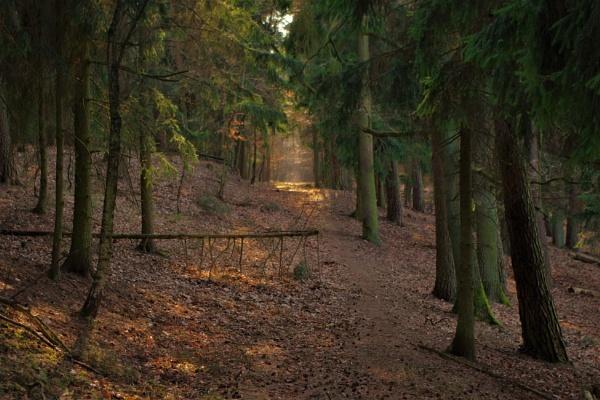 POLAND - Nature\'s Impressions No.54 by PentaxBro