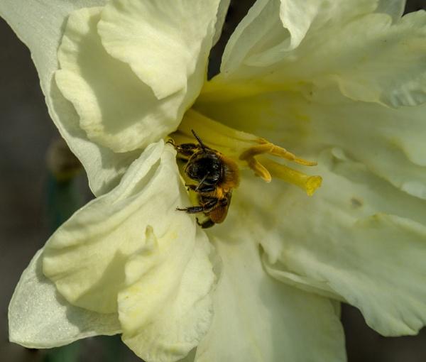 Bee by kamil018
