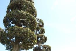 Photo : Well pruned