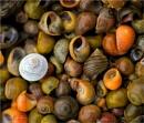 Sea Shells by MalcolmM