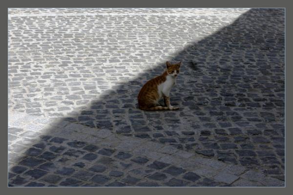 Cat of Cairo by prabhusinha
