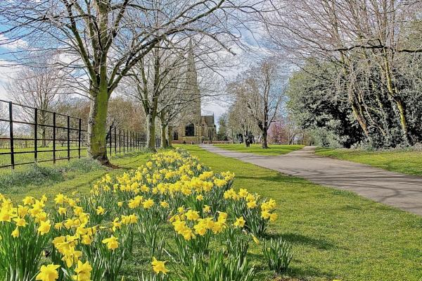Daffodils at Wentworth Church by harrywatson