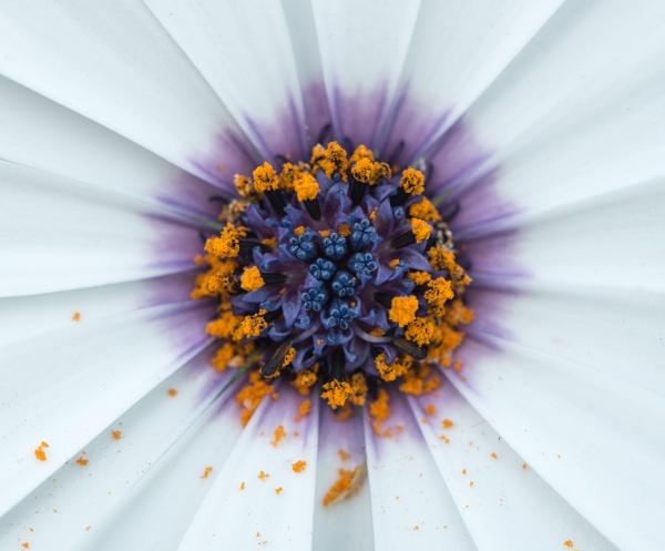 Spilt Pollen by Rorymac