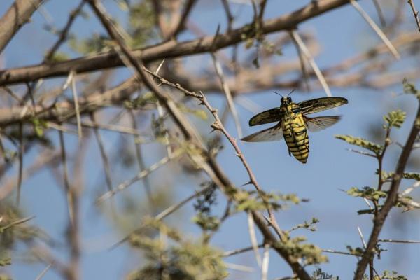 Big flying bug by WorldInFocus