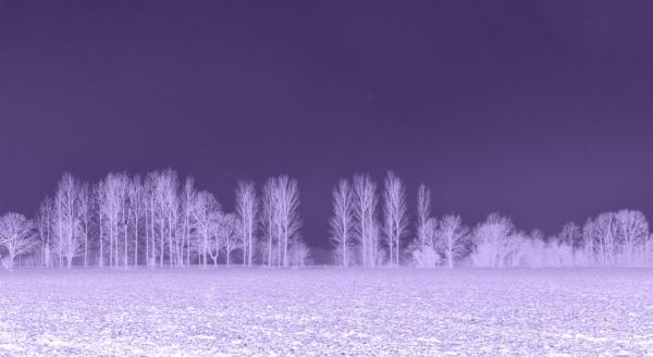 Winter Wonderland by RLF