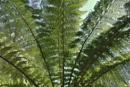 Green beauty!!! by Chinga