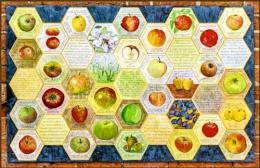 Apples at Attingham