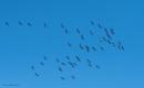 Cranes. by kuvailija