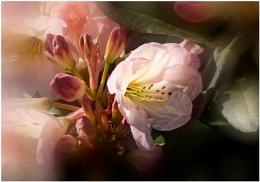 Wisley Spring