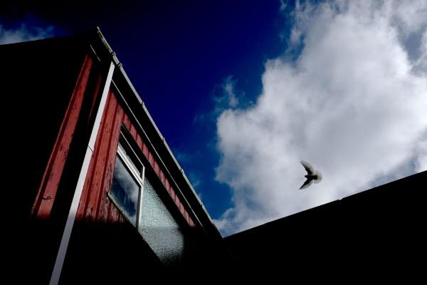 Bird by ljesmith