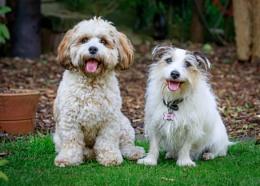 Einstein & Pippa