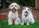 Einstein & Pippa by Stevetheroofer