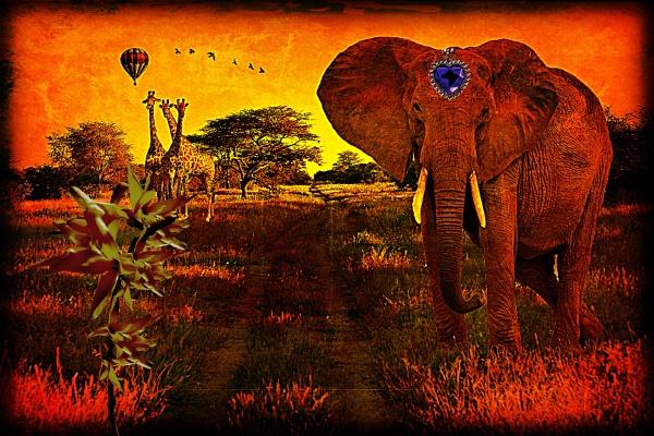 Elephant and Giraffes