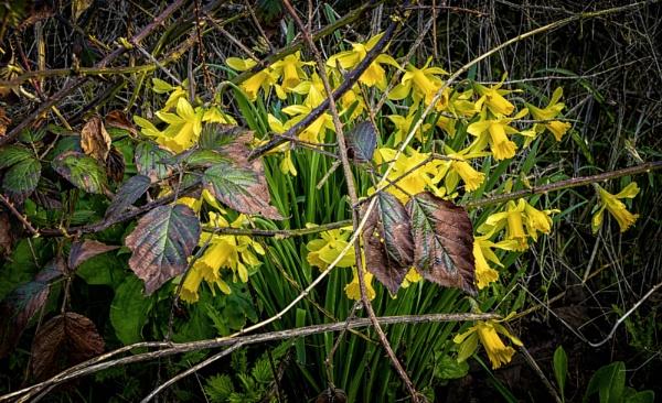 Hidden amongst thorny brambles by BillRookery