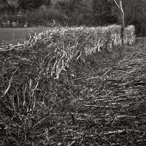 new hedge...