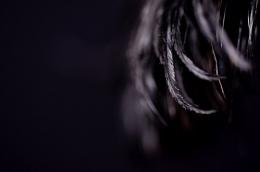 Photo : Feather