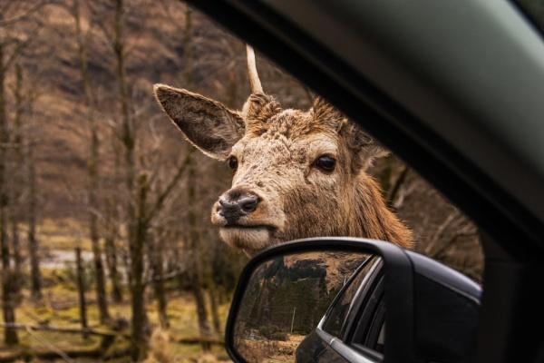inquisitive Deer by dven
