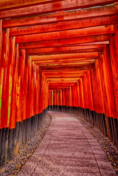 Fushimi Inari by Stephen_B