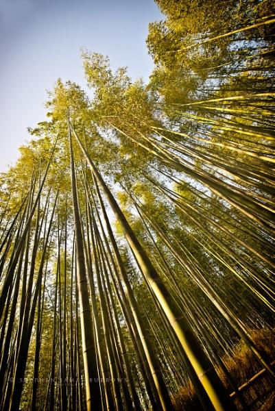 Arashiyama Bamboo Grove by Stephen_B