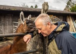 Llama tell you a story...