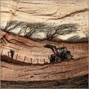 Farming on Firewood by BlueRoom