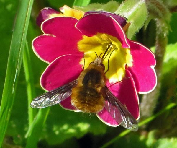 Busy Bee Fly by KarenFB