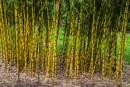 Batsford Bamboo by johnwnjr