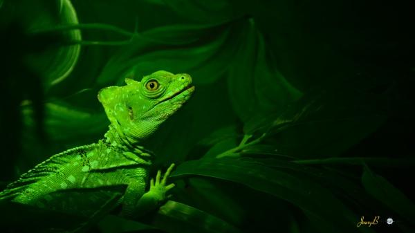 chameleon by jb_127