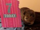 Happy Birthday Bertie 7 Today by SUE118