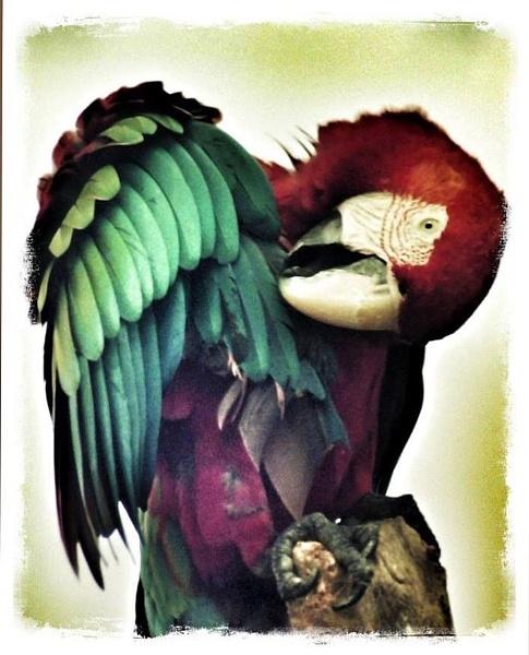 Parrot by StevenBest