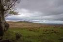 Dartmoor by interchelleamateurphotography