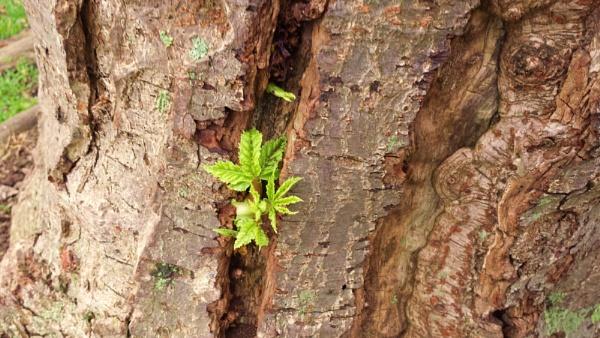 Tree greens.... by Chinga