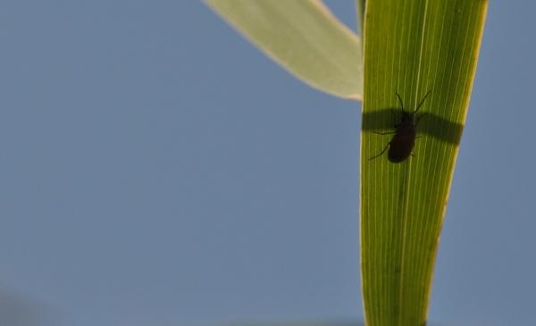 Shadow & bug... by Chinga