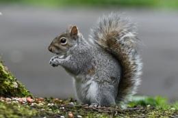 Nuts Anyone