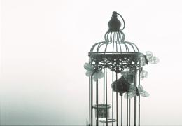 Photo : the birdcage